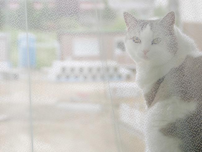 猫が影の現場監督?