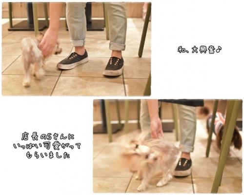 cats 0806