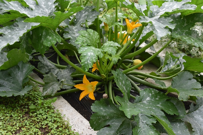 705 菜園