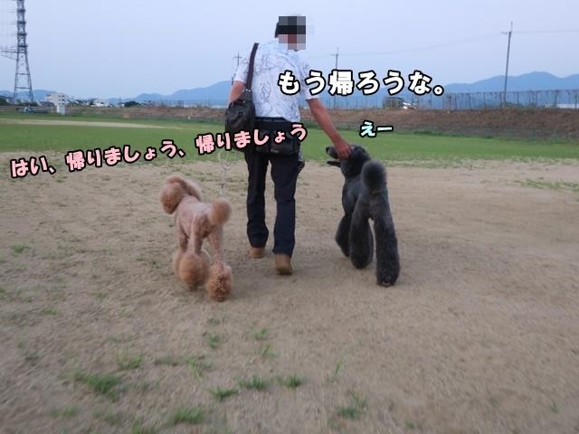 IMG_266120180722.jpg