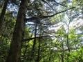 森に入る日差し