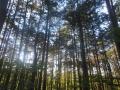 檜林も涼しい