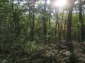 爽やかな森の夏