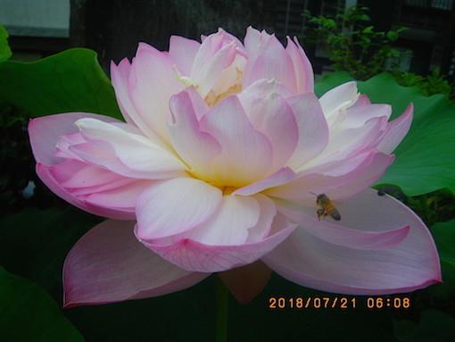 180721-26.jpg