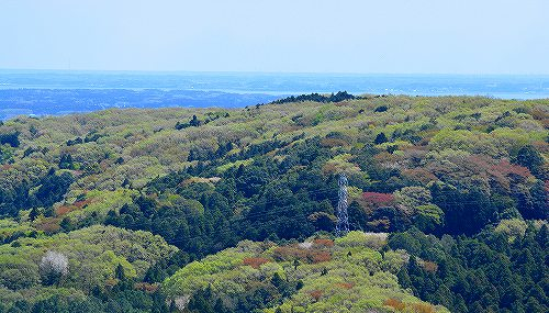 s-新緑の山20180408