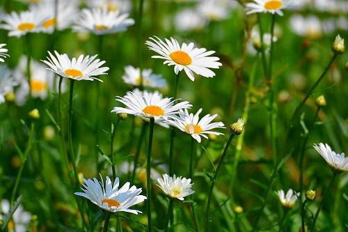 s-白と黄の花20180430