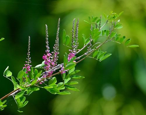 s-紫の花②20180527