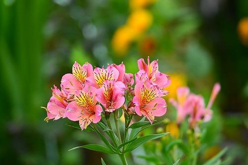 s-ピンクの花2180617