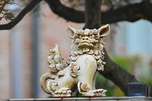s-狛犬20180617