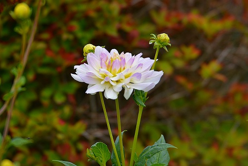 s-白い花20180617