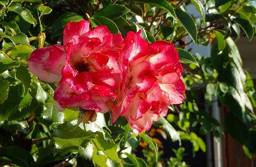 s-赤い花②20180701