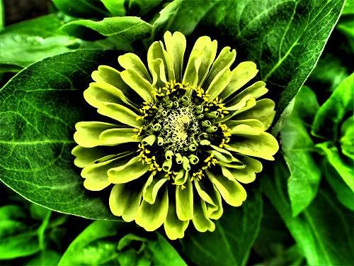 s-まだら模様の花②201807