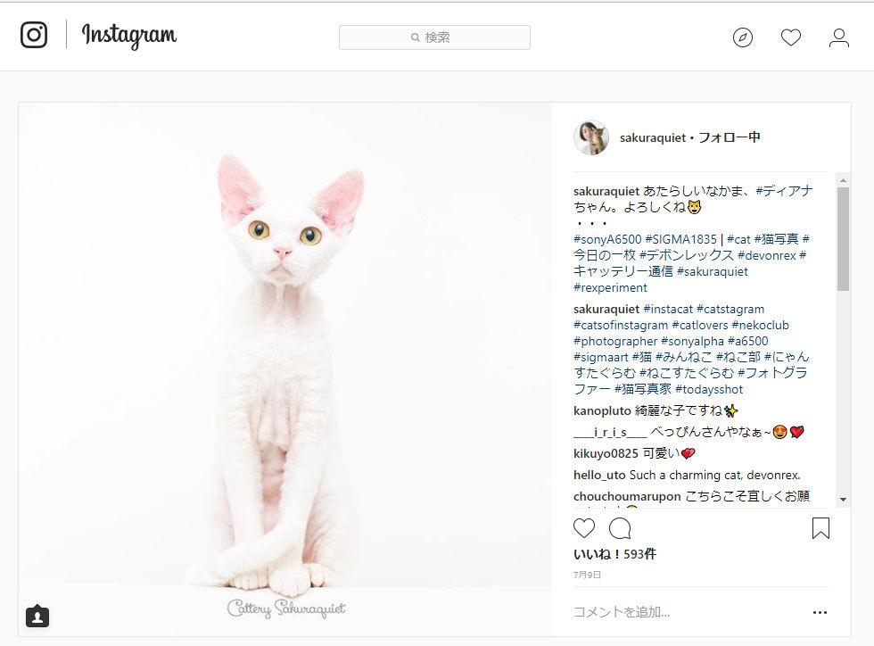 NEW★デボンレックスモデル猫リング