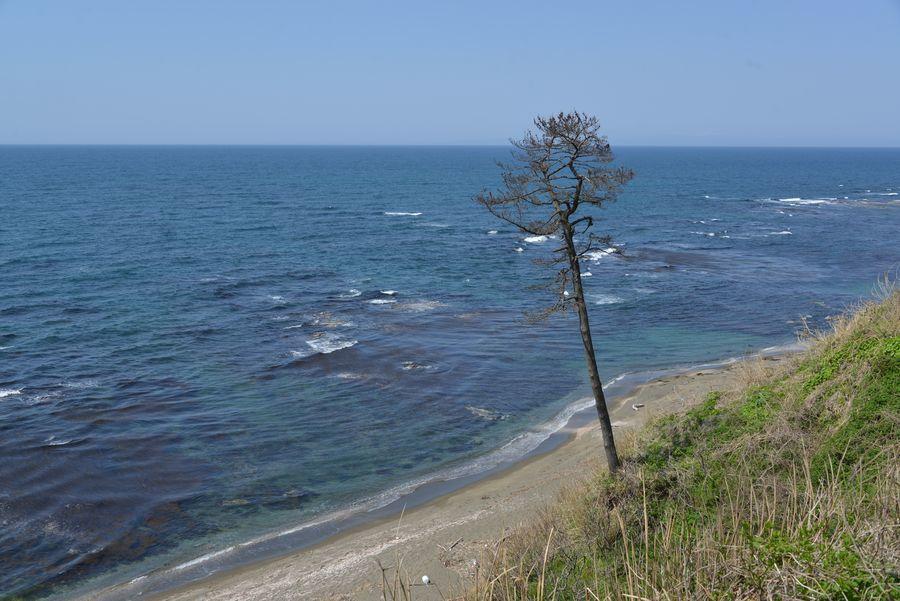 春の海-4
