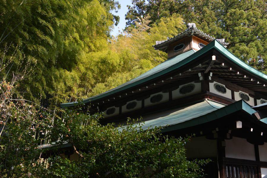 新緑と花 西生寺-2