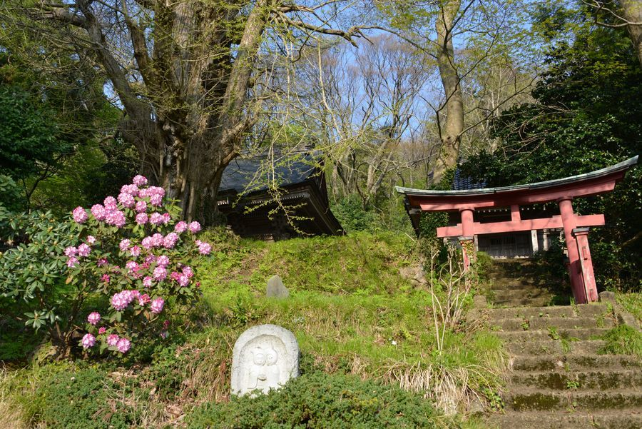 新緑と花 西生寺-4