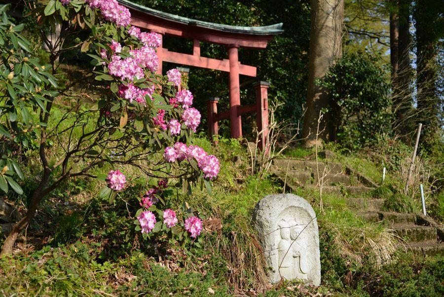 新緑と花 西生寺-3