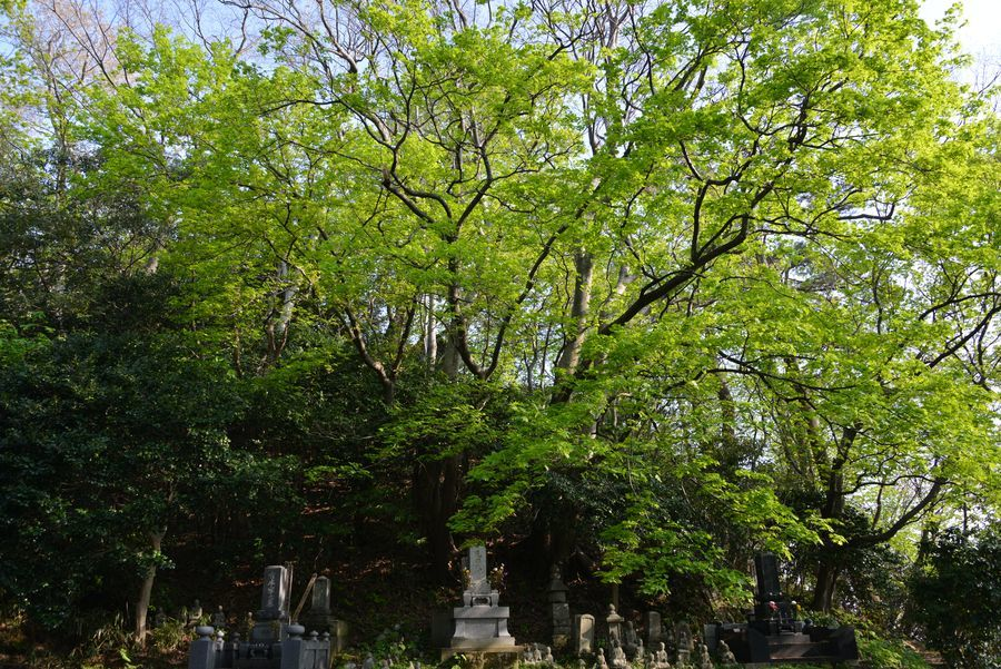 新緑と花 西生寺-5