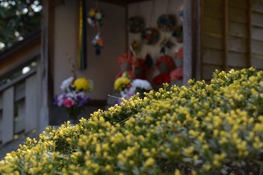 新緑と花 西生寺-6