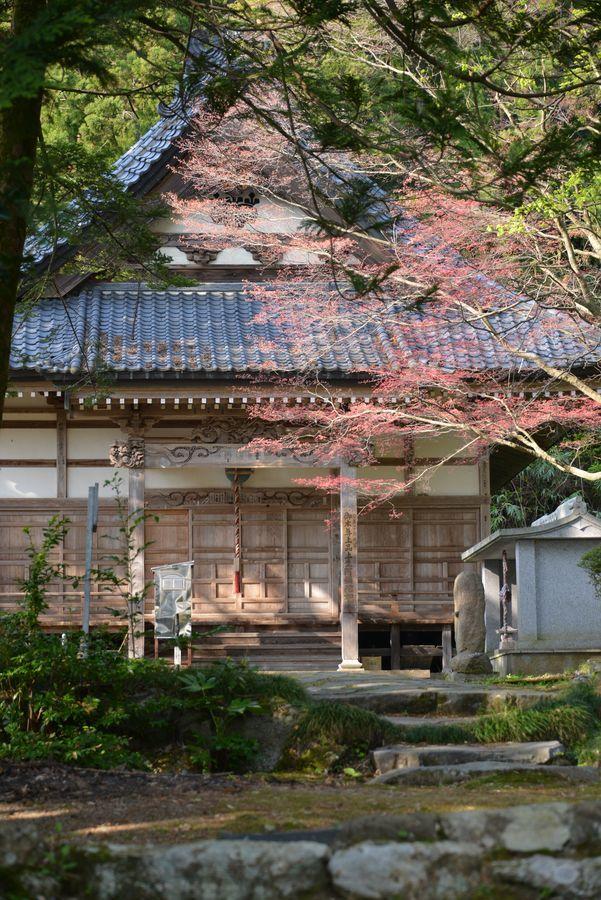 新緑と花 西生寺-7