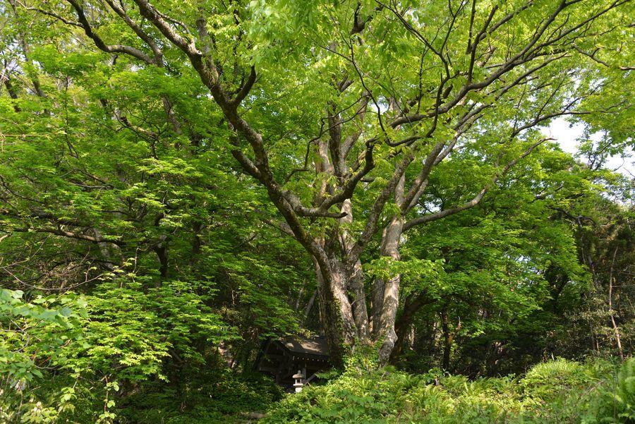 樹 新緑-1