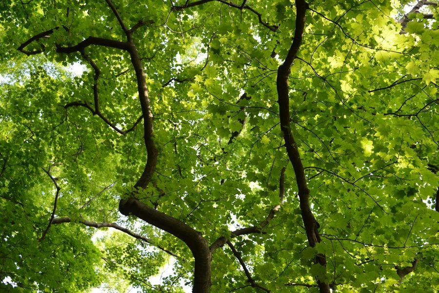 樹 新緑-4