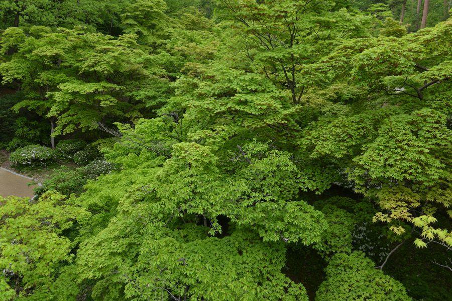 新緑のもみじ谷-2