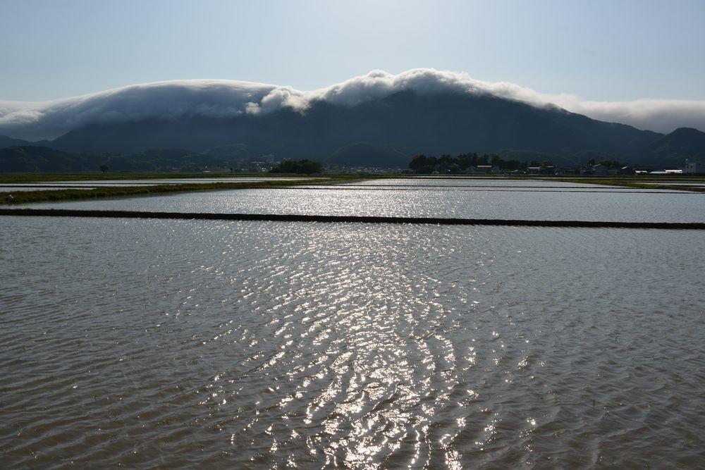 水田と弥彦山-1