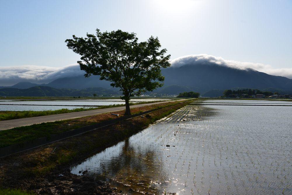 水田と弥彦山-3