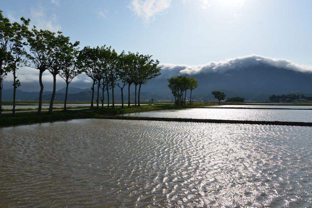 水田と弥彦山-4