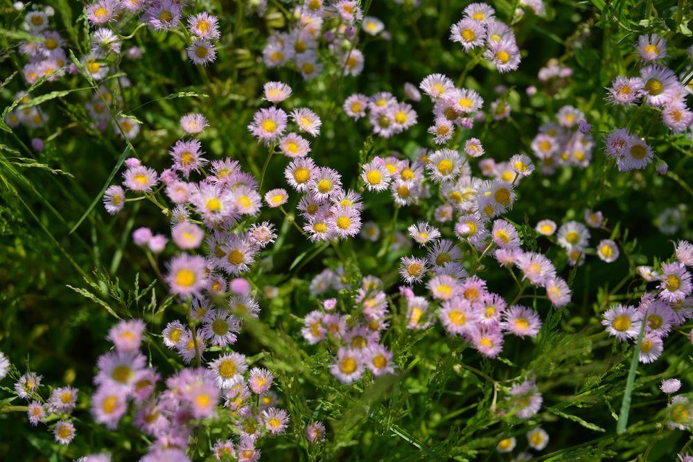 野に咲く花-4
