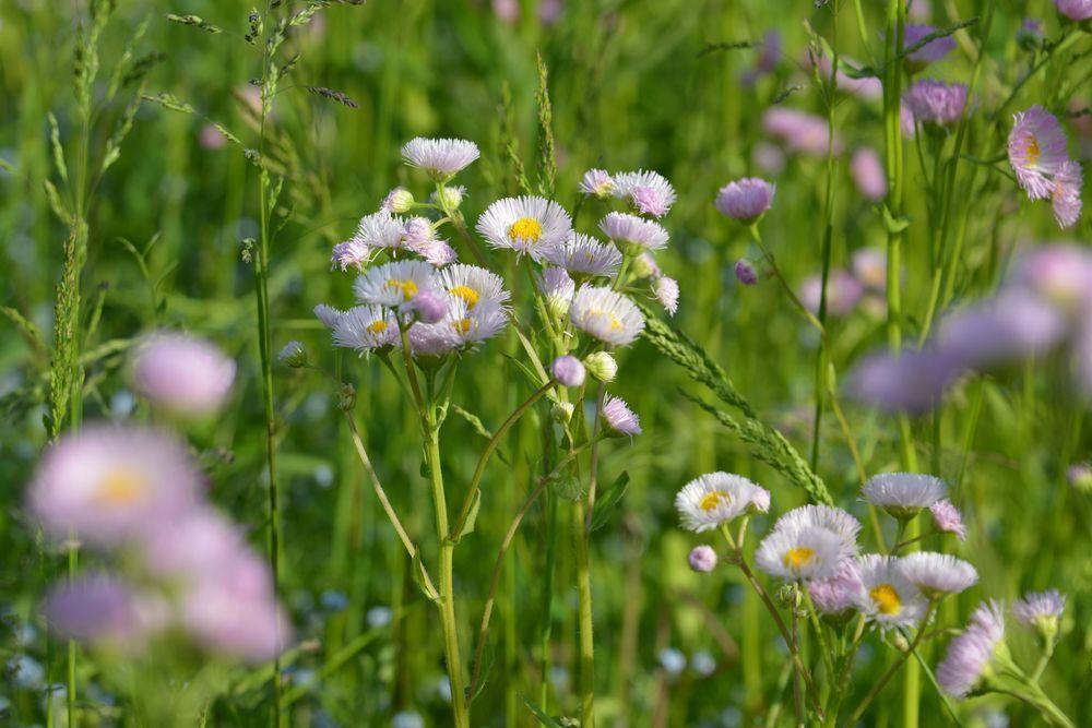 野に咲く花-6