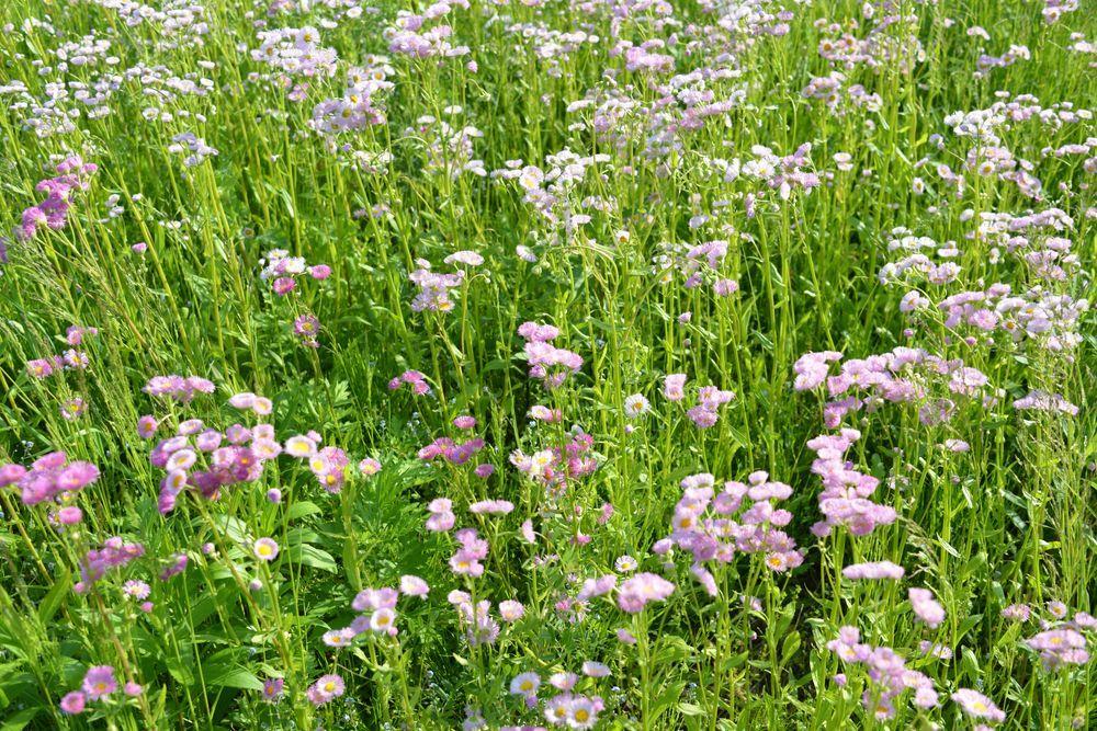 野に咲く花-7