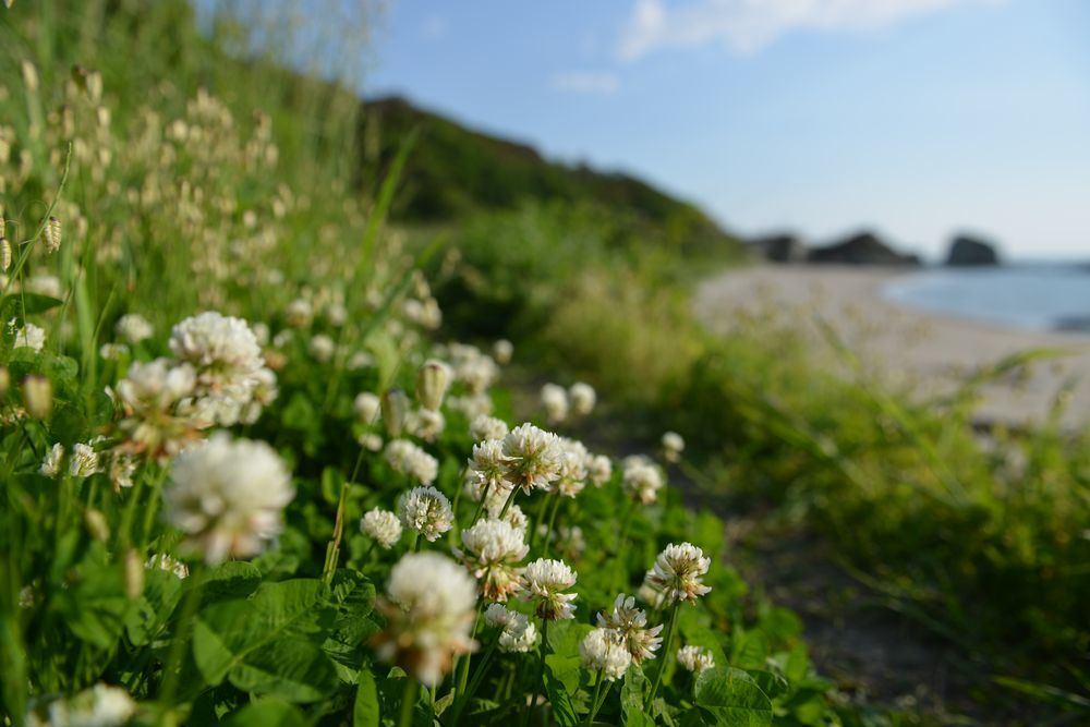海岸に咲く―1