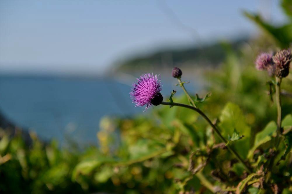 海岸に咲く―2
