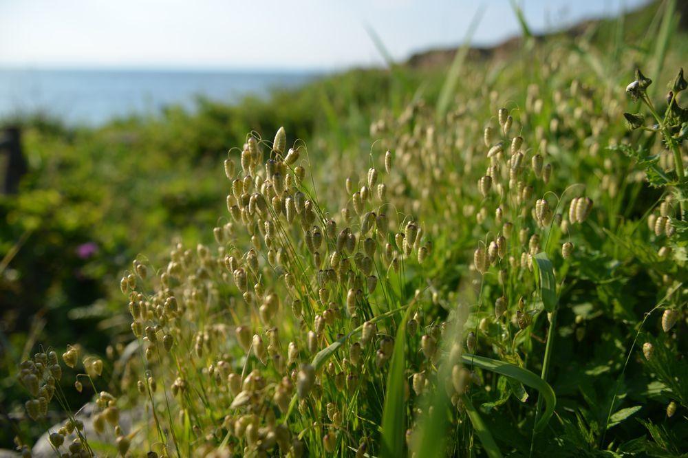 海岸に咲く―3