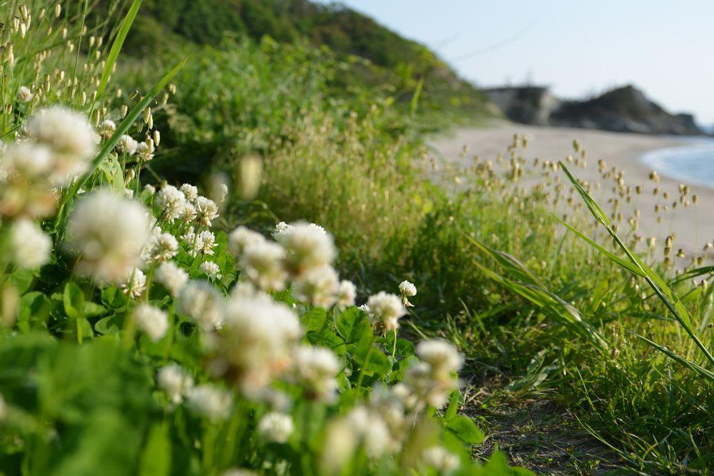 海岸に咲く―4