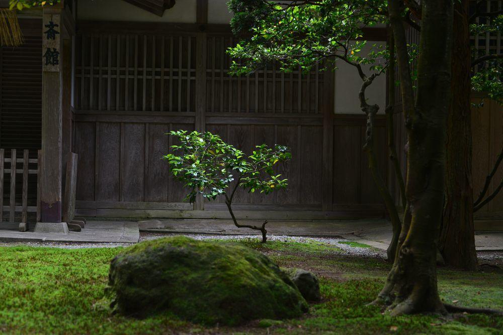 弥彦神社 スポット-4