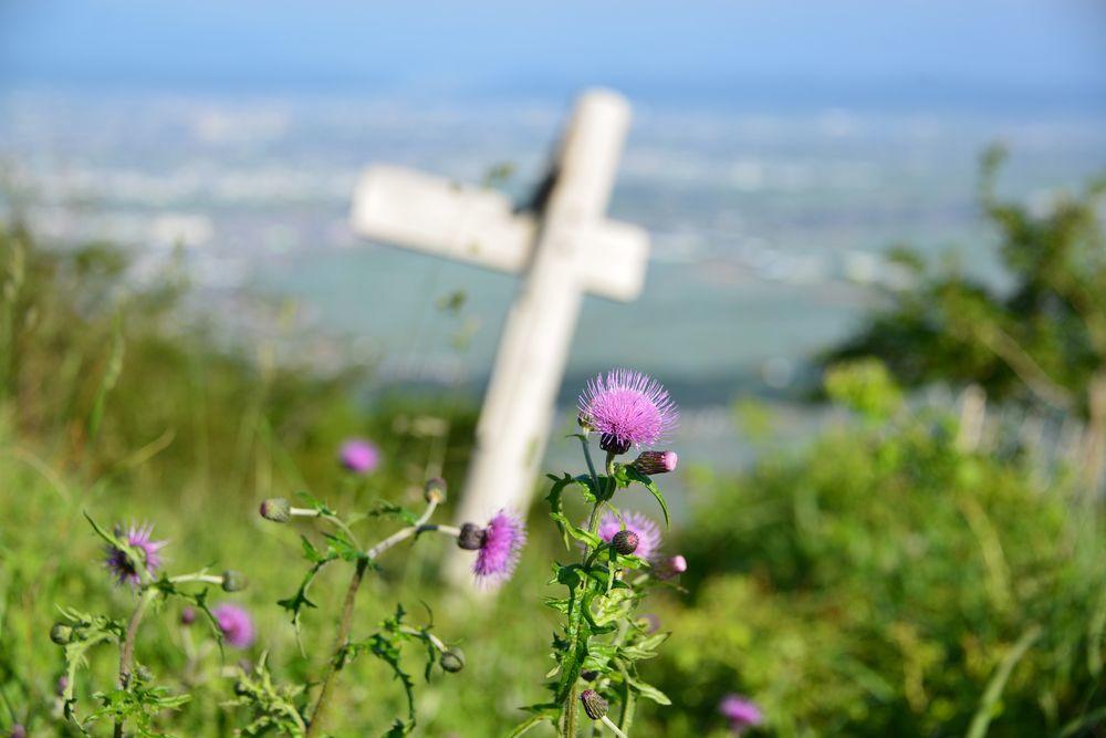 山の上の花-5