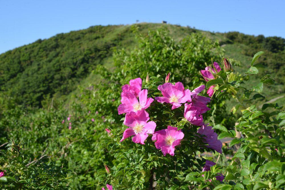 山の上の花-6