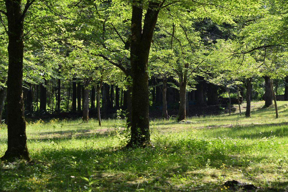 悠久山公園-6