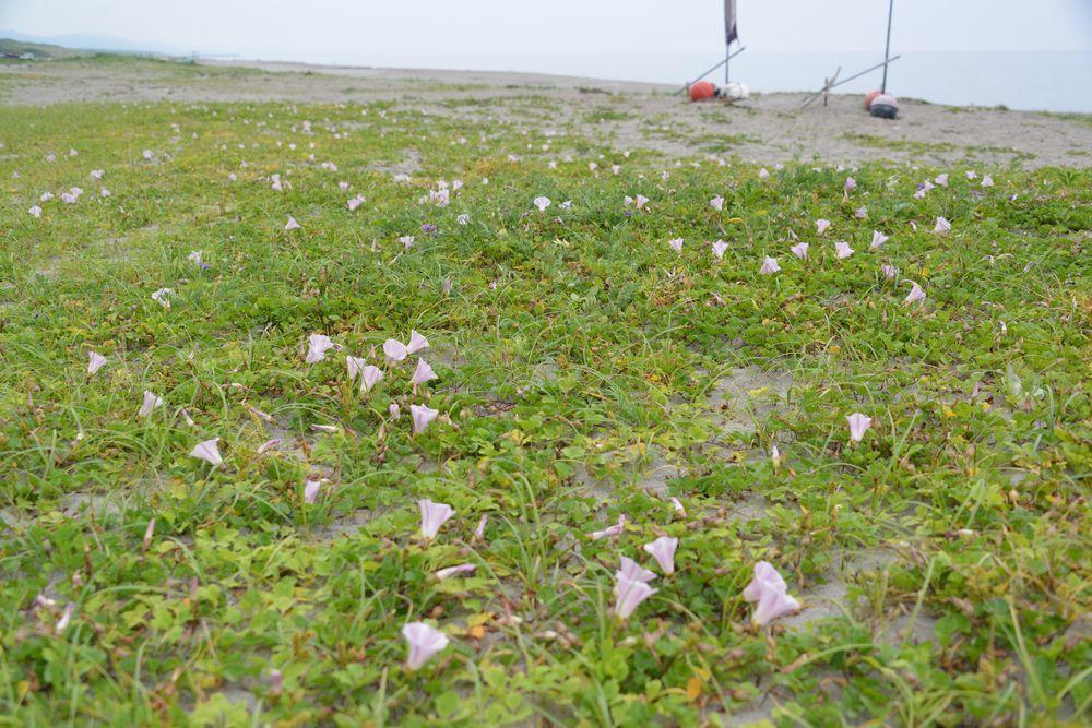 浜辺に咲くー1