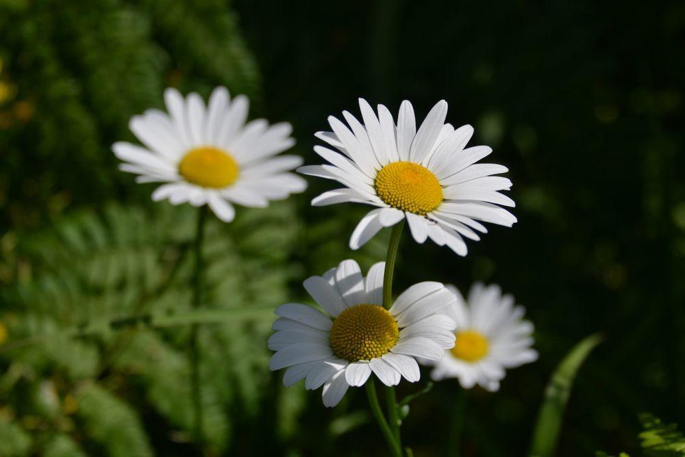 花たち-10