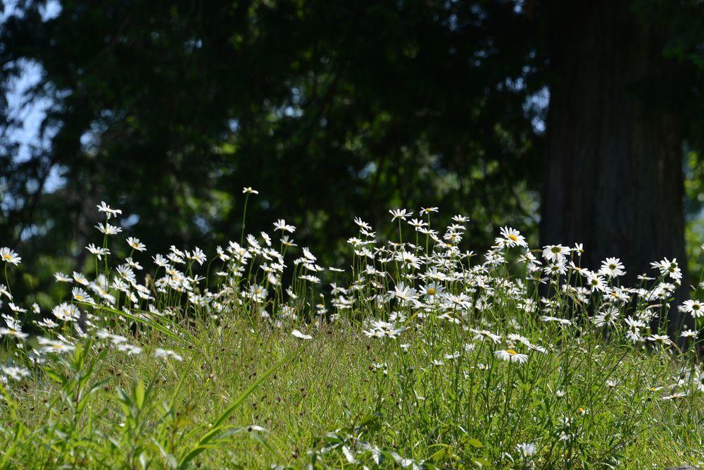 花たち-6