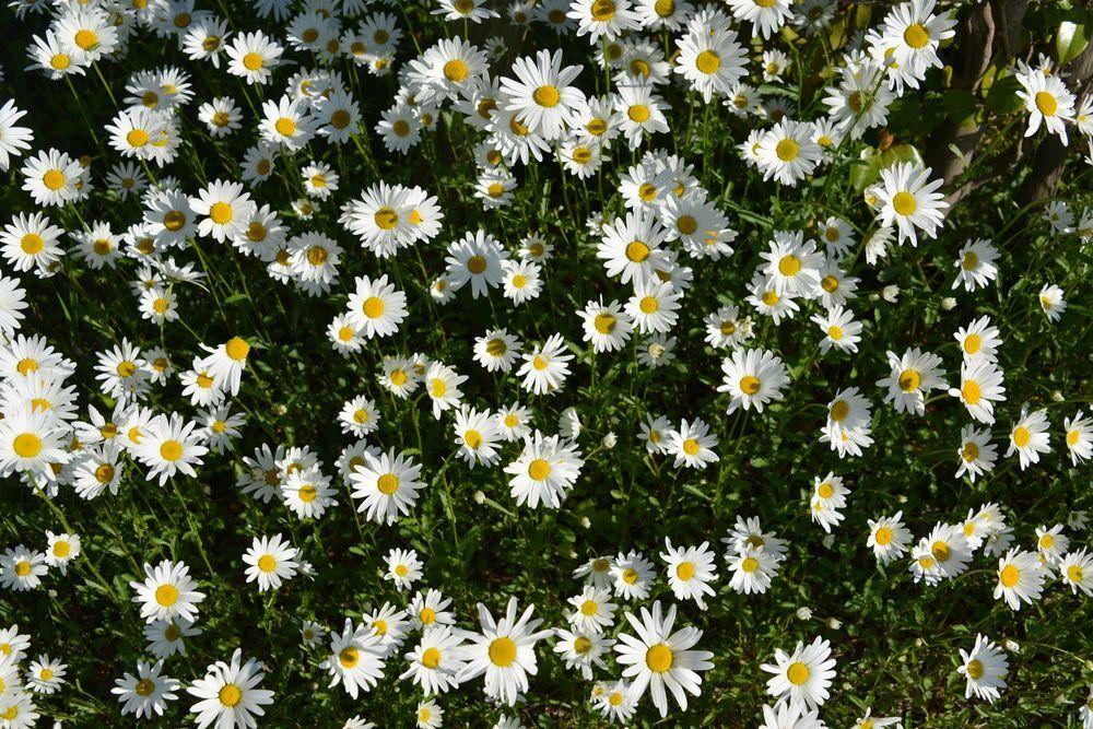 花たち-7