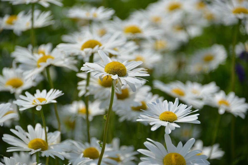 花たち-9