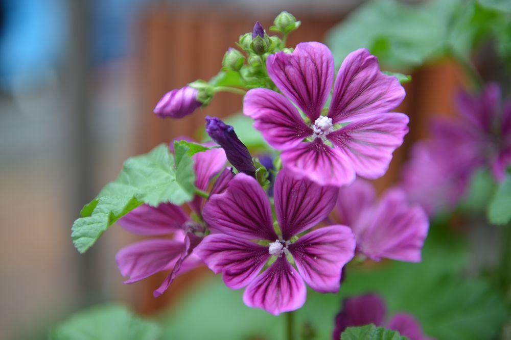 我が家の花と-1