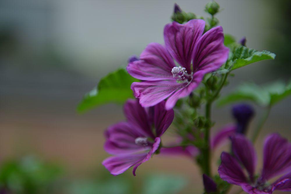 我が家の花と-2