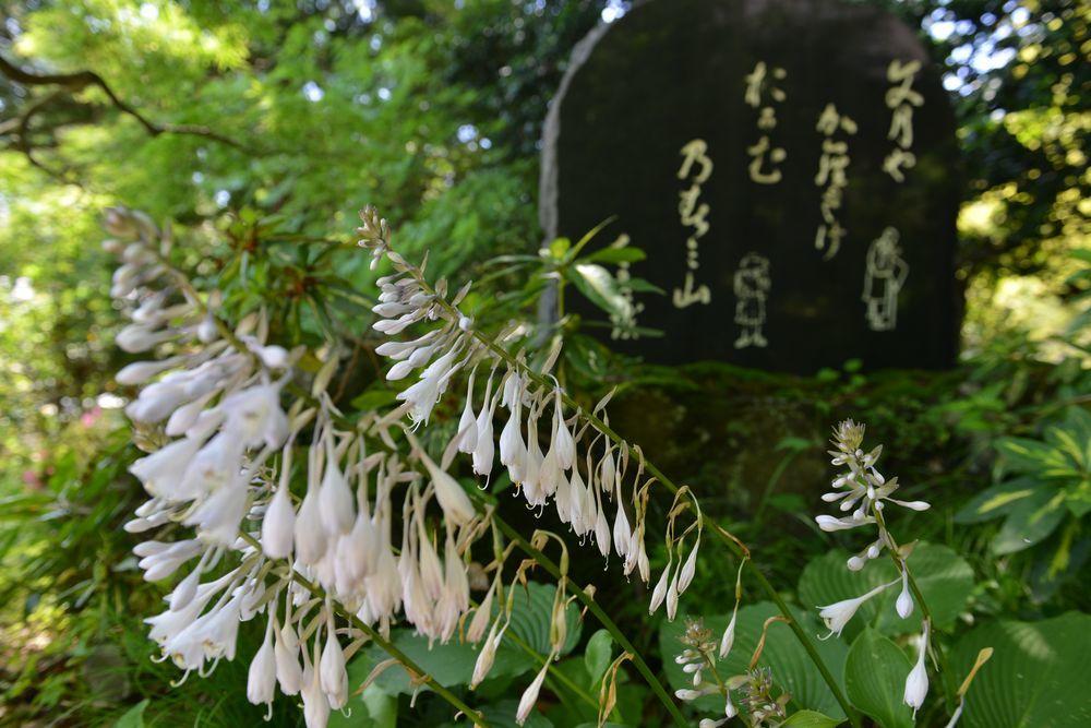 梅雨の晴れ間 西生寺-4