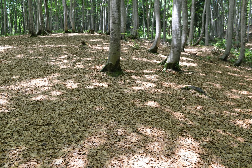 美人林 木漏れ日-1